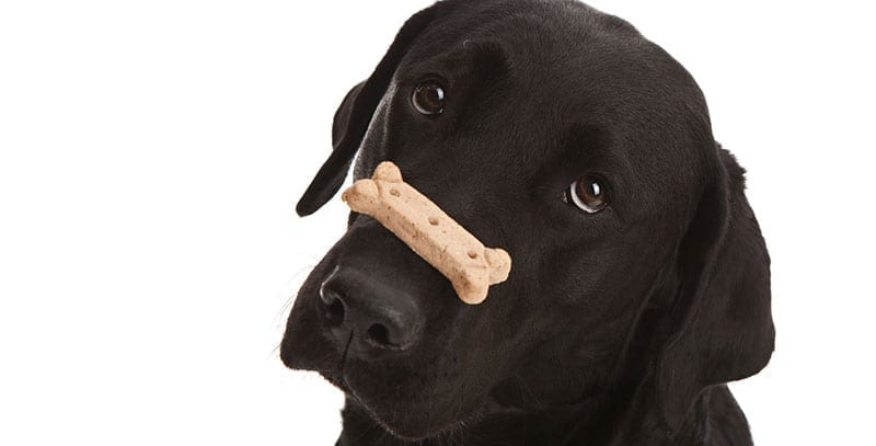 Are Your Pet's Treats Treating Your Pet Well?