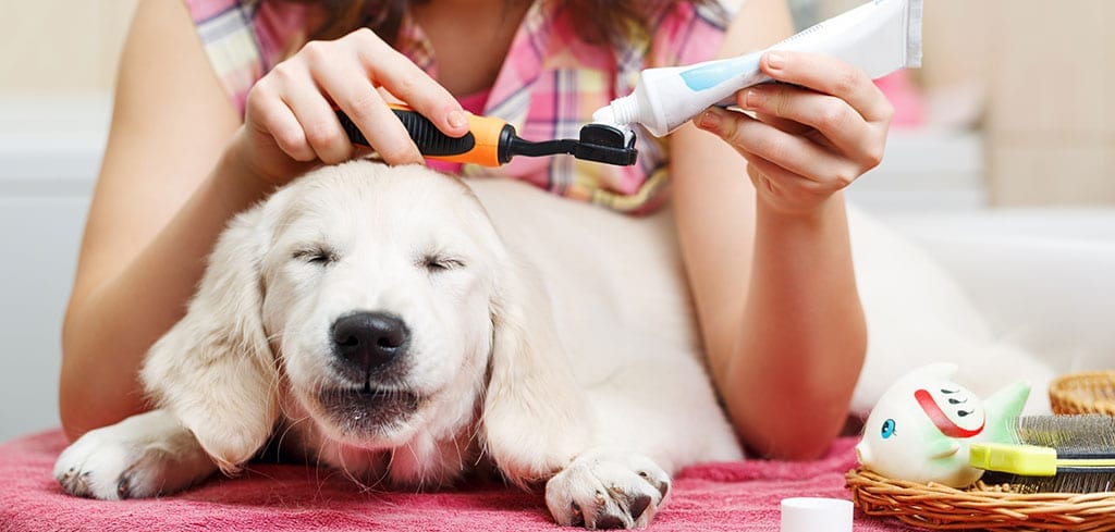 Lab about to get teeth brushed