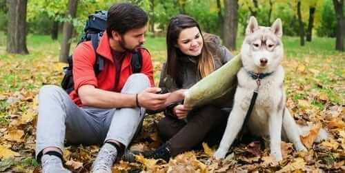 Dog owners going camping with their dog