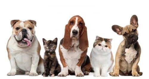 Pet Adoption Options