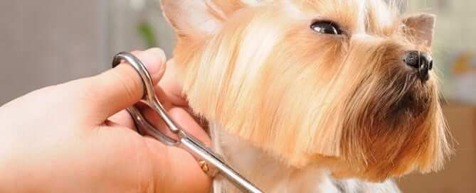 Dog getting hair trimmed - Featured Image