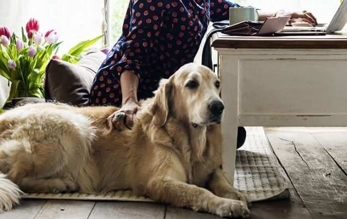 Dog sitting next to owner being comforted