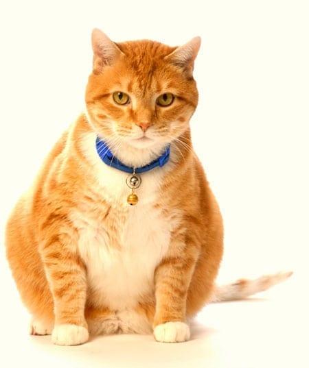 Is My Pet Fat?