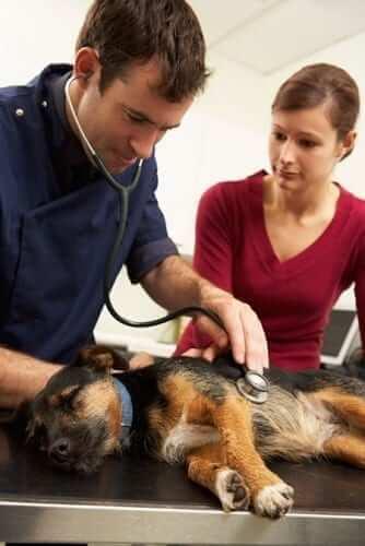 Anesthesia Diabetic Pet