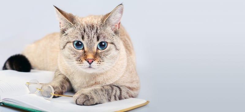 Cream Cat Sitting on a Book