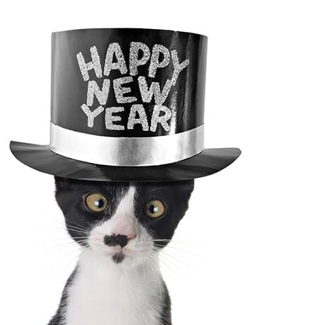 Healthy pet new year