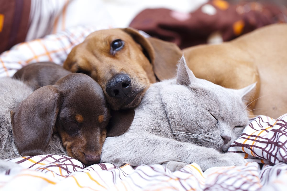 Lower Urinary Tract Disease in Dogs & Cats