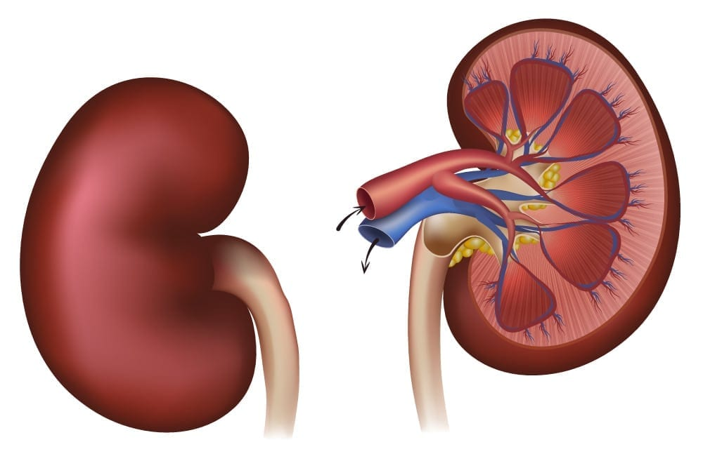 Kidney Issues, Dialysis and Diabetes