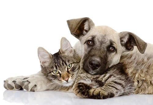 Probiotics - Cat and Dog