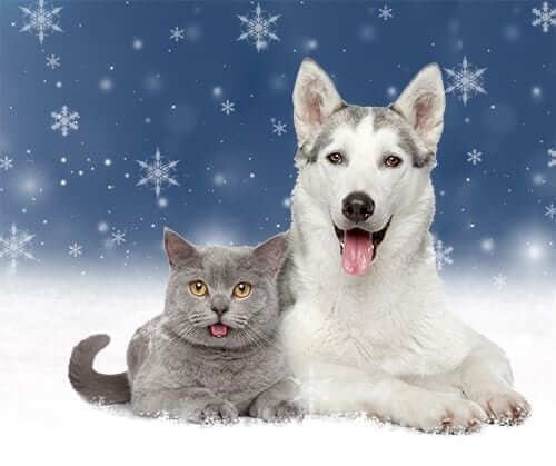 Cat and Dog with Winter Background