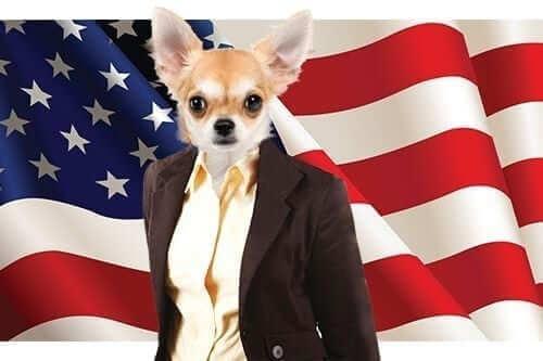 Cat and Dog Politics