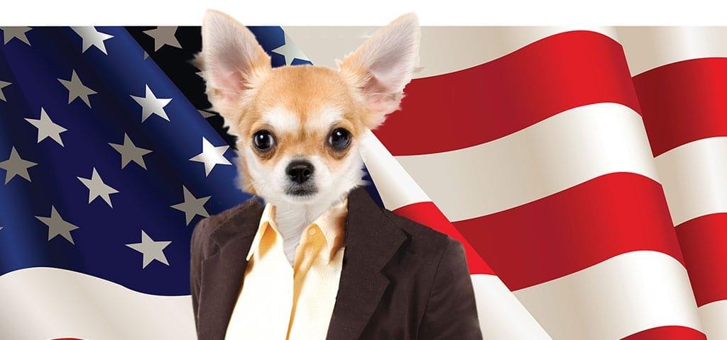 Pet Politics 2