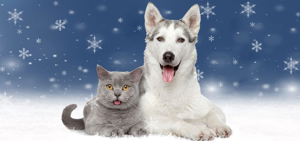Cat and Dog Winter Image