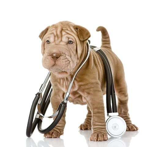Diabetic Pet Management – Goals for 2016