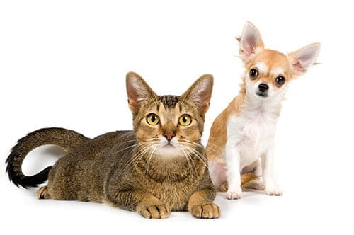 Diabetic Cat and Dog