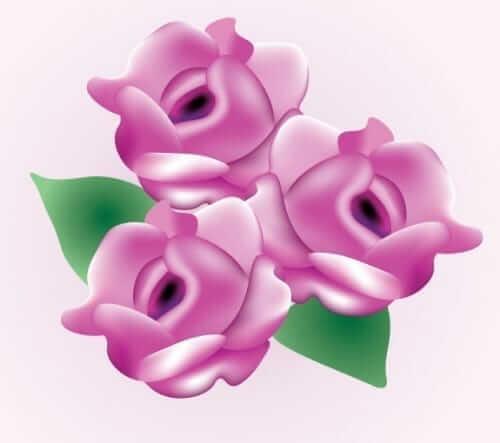 Valentines Day Pink Rose