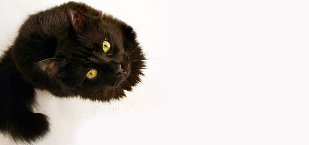 black cat staring up