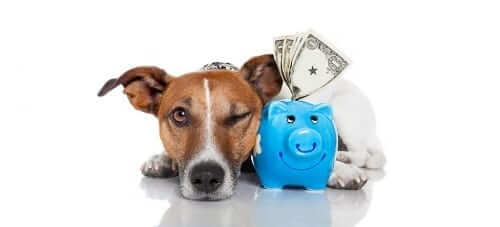 Dog with piggy bank full of money