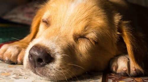 Featured Image - Dog Sleeping