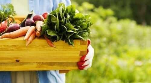 Home Grown Garden Veggies Featured Images