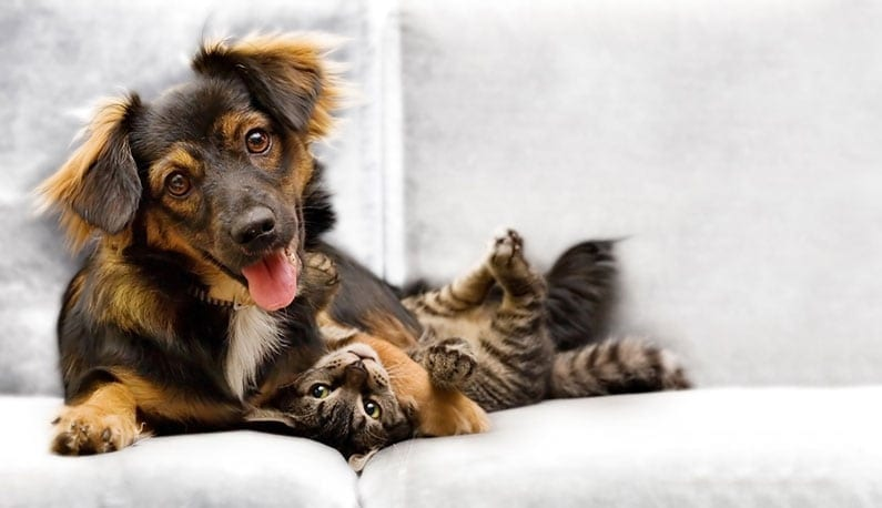 Dog and Cat on Couch