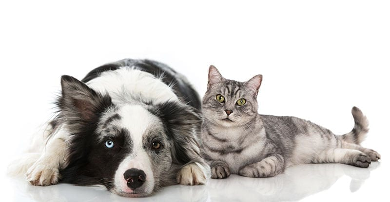Back To Basics For Diabetic Pets | Part 4