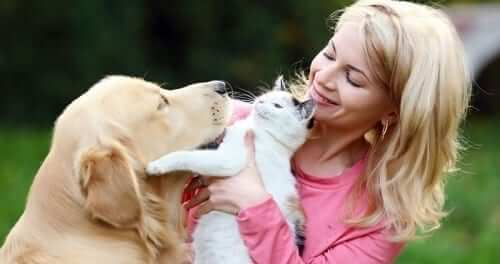 Woman with Cat and Labrador