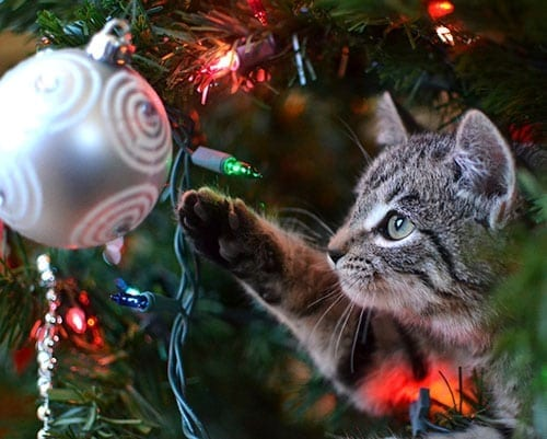 Kitten in Xmas Tree