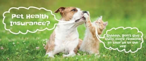 Cat holding dogs mouth shut