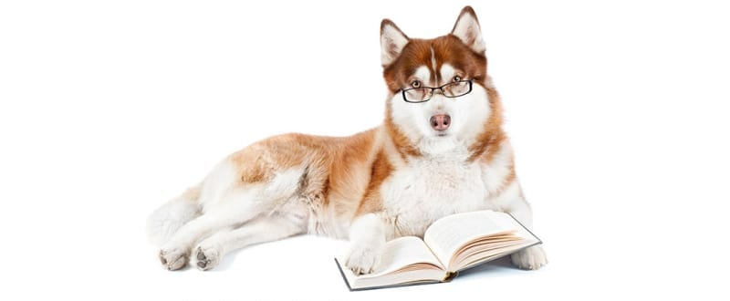 Smart Looking Dog with Glasses