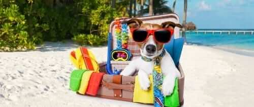 Dog in Suitcase on Vacation