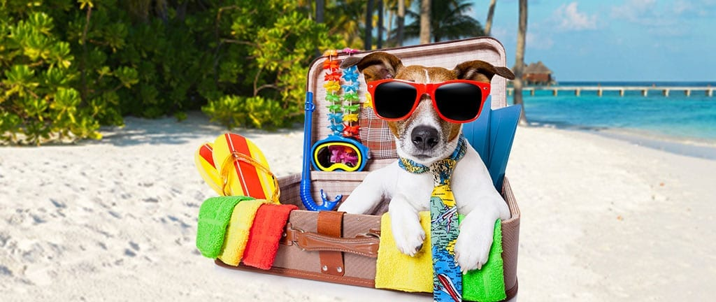 Dr. Joi's Tips For Traveling With Pets