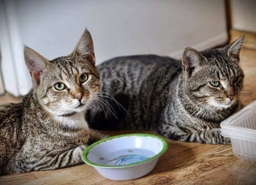 Two Cats Sitting Next to Empty Bowl