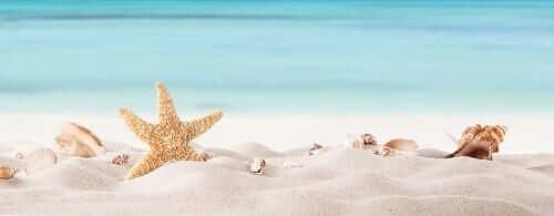 Beach Shells on a Beach