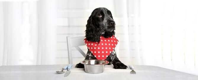Hound Dog Waiting to be Fed
