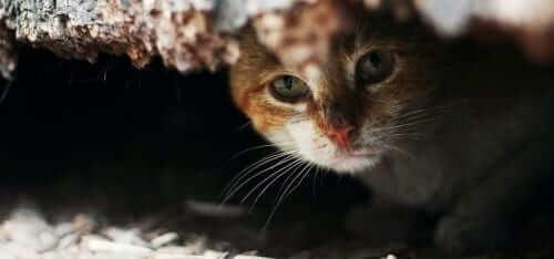 Cat hiding under building