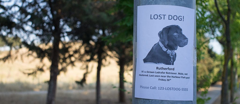 What To Do If Your Pet Is Lost