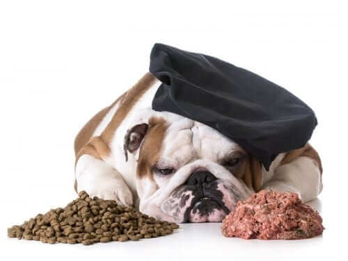 Dog looking at dry and wet food