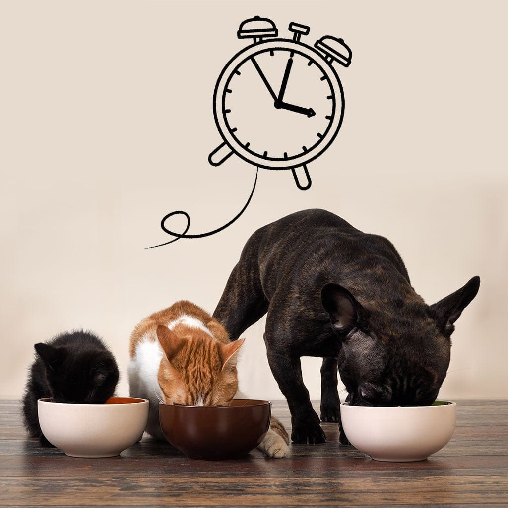 The timing of insulin injection with cats and dog