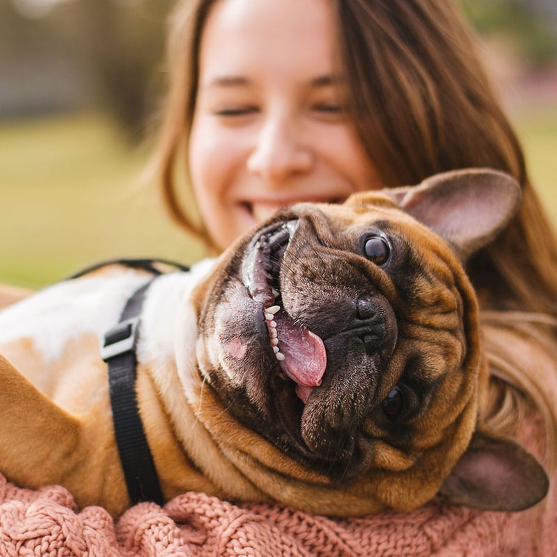 Timing of Insulin Injections is Everything! | Pet Diabetes Care