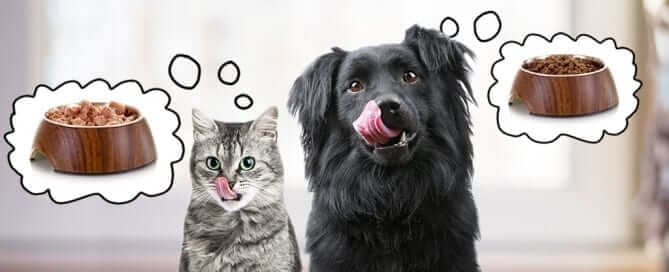 Cat and Dog Licking Lips