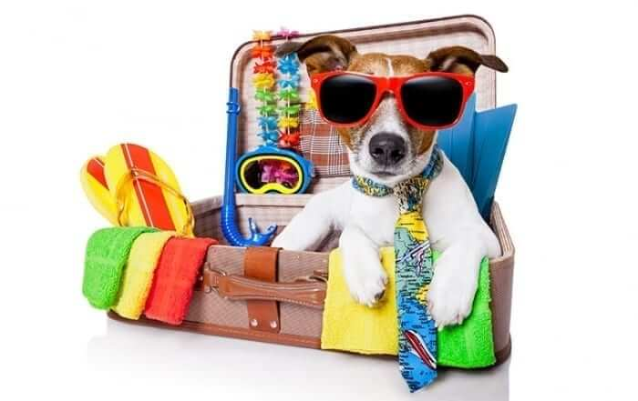 Dog getting ready for travel