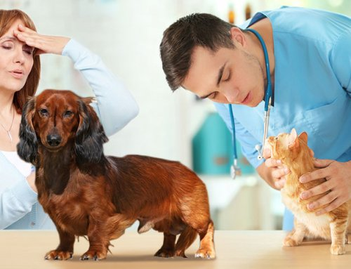 Communication with Your Veterinarian and Expectations with Pet Diabetes