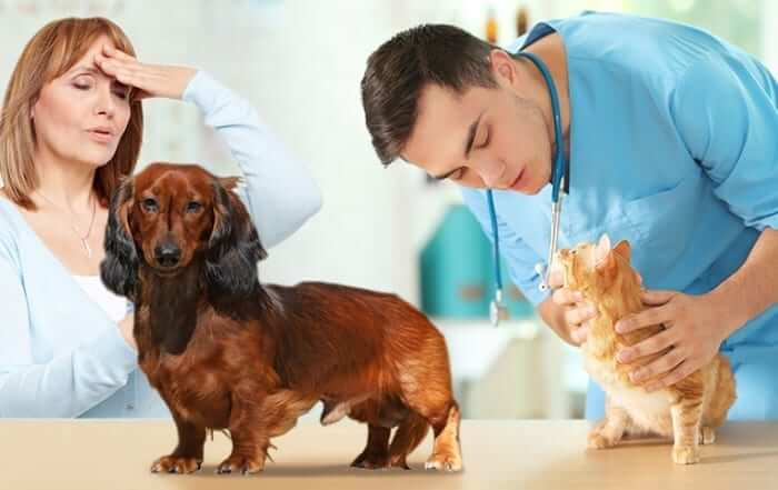 Communication with Your Veterinarian