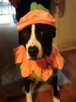 Pumpkin Eli