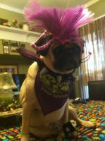 Rockstar Pug Otis!