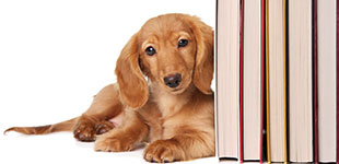 Pet Health & Cookbooks